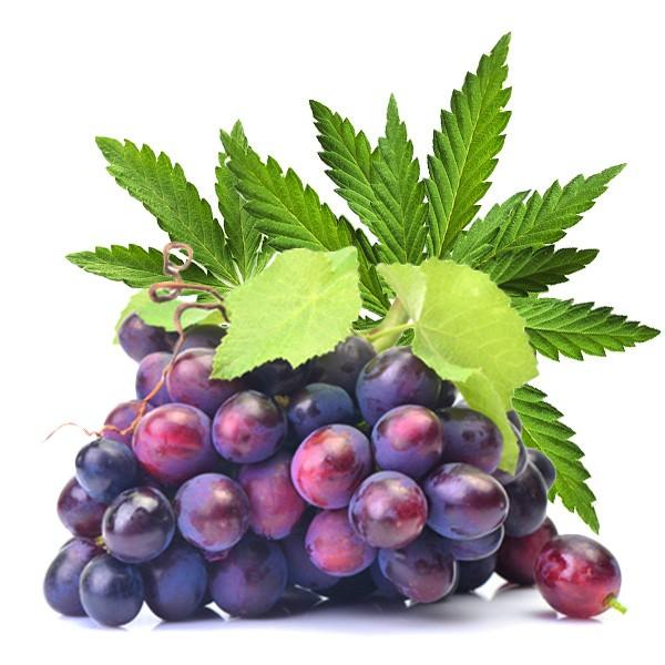 Dark Burner Chill-Out-Aroma Purple Haze